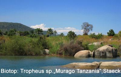 Biotop Tanzania.jpg