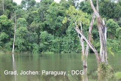 Grad, Jochen- 1 Paraguay ; DCG